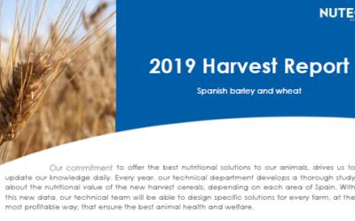 Informe final campaña cereal 2019