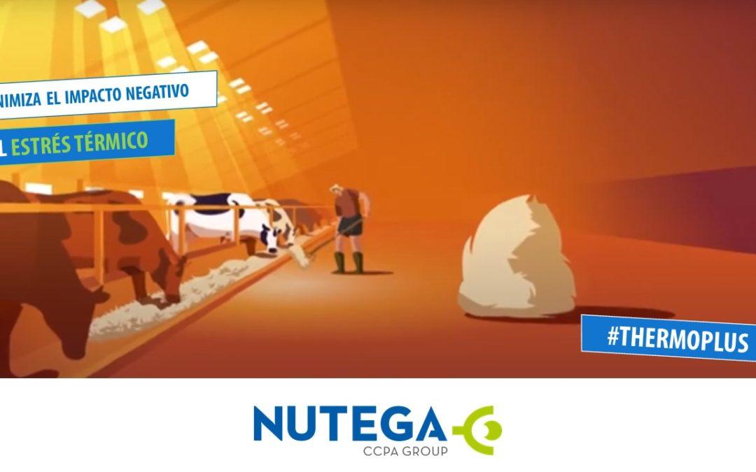Mejora de producción de rumiantes de leche con estrés térmico