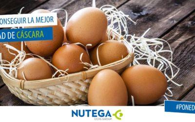 Cómo conseguir la mejor calidad de cáscara en huevos de consumo