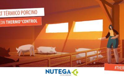 Mantener el confort térmico en porcino